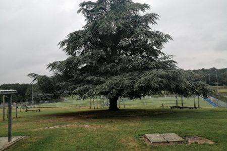 tree in park nature nerd