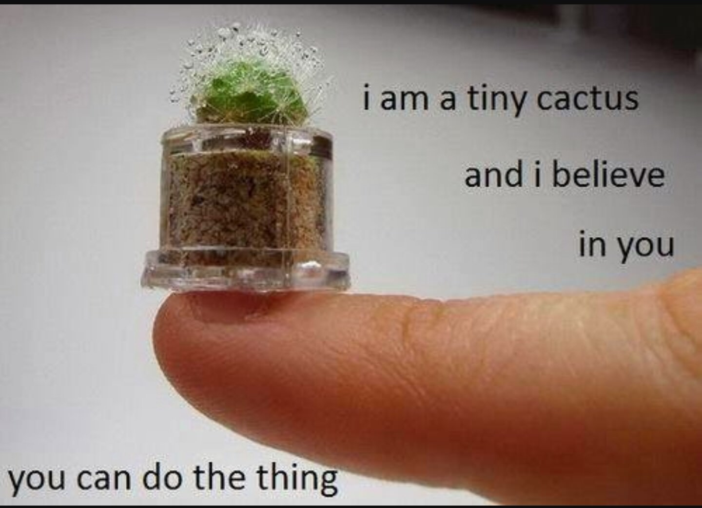 NaNo17 :: The Myth of the Tiny Cactus